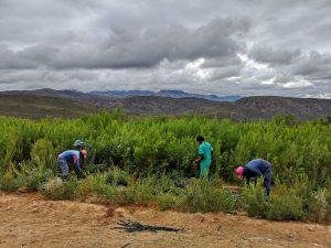 Rebuilding the landscape by building a movement