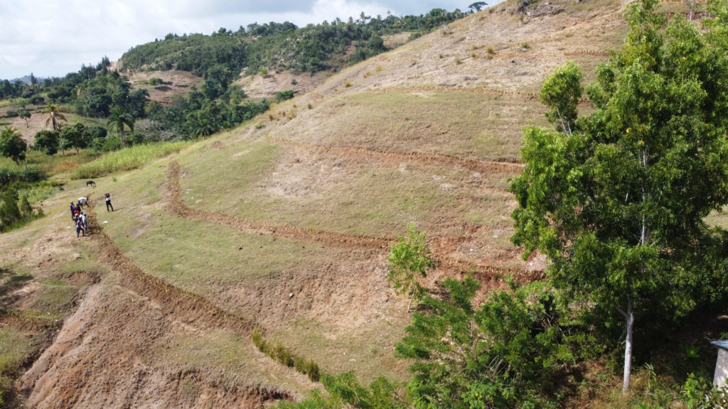 An image for Community members planting grass strips on hillsides as erosion control measures (Osse Manuel Recule, Haiti Red Cross)