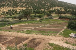 permaculture farming morocco