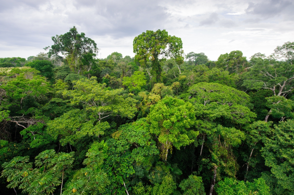 An image for The Amazon is (still) the most biodiverse region in the world