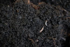 rich soil worm